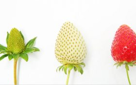 پنج مرحلهی اساسی چرخه عمر کسبوکار